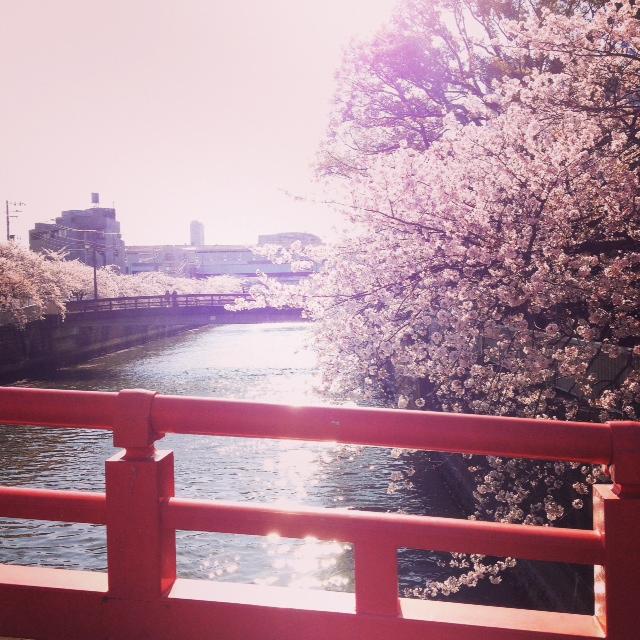 荏原神社の桜。