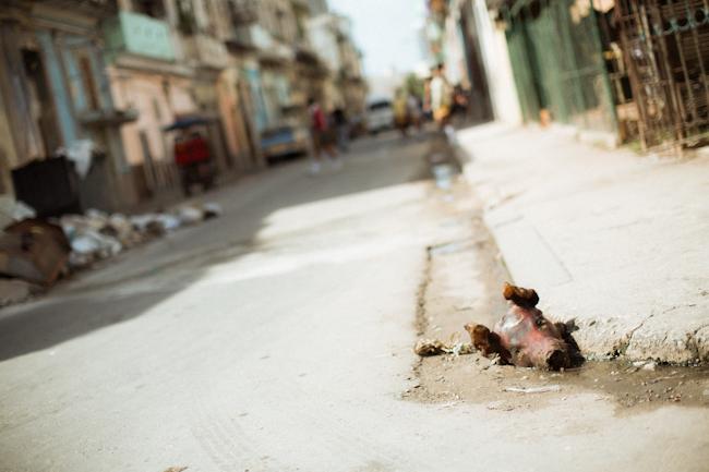 道端 / ハバナ Havana